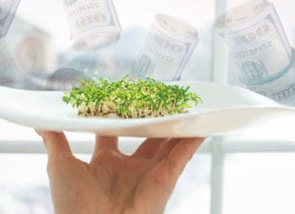 Microgreens on a plate and money in the background