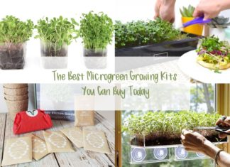 A collage image with various microgreens in trays