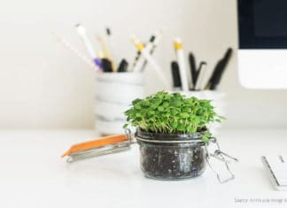 A jar with microgreens standing on a table