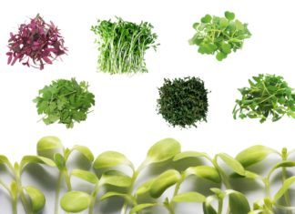 Collage image with several microgreens