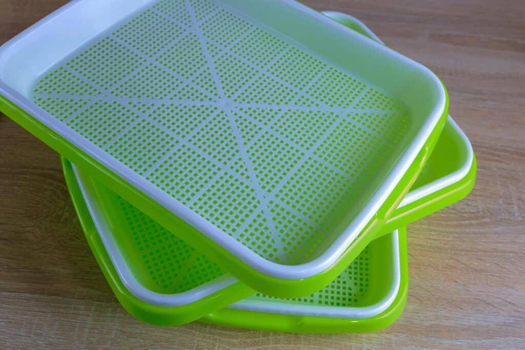 Green Sheing sprouting trays