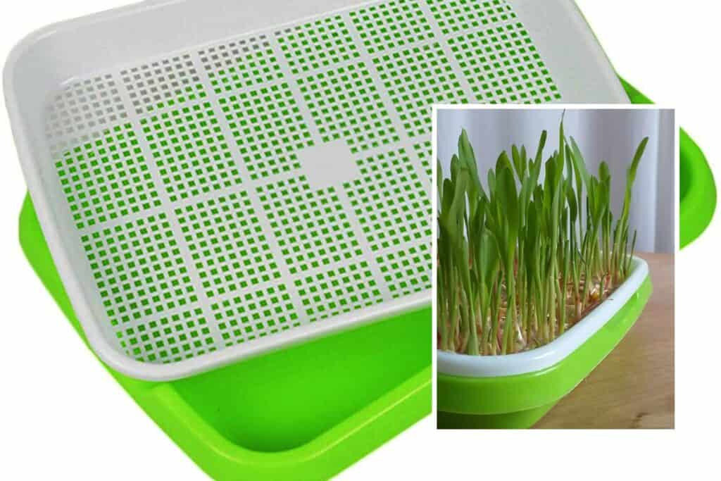 Green and white sprouter tray