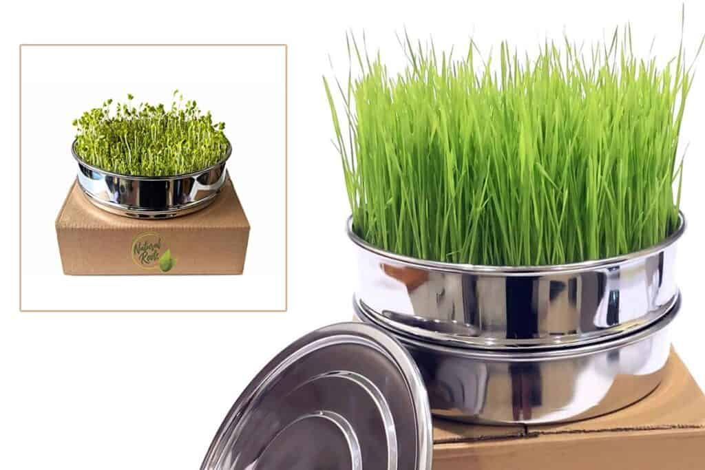 Stainless sprouting tray