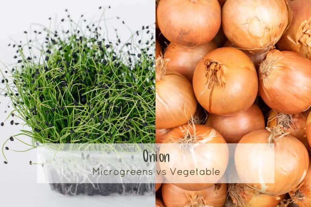 Onion microgreens vs full-grown vegetable